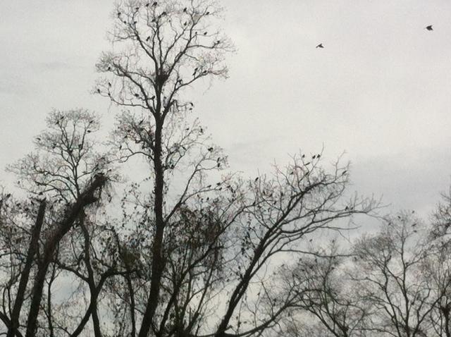 Bird Frenzy